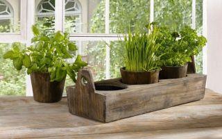 7 фруктов и овощей, которые можно вырастить на подоконнике