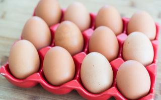 Вся правда о яйцах: панацея или яд