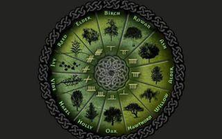 Самые богатые знаки по гороскопу друидов