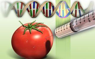 Что такое ГМО на самом деле