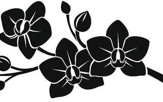 Орхидея — суеверия и приметы, связанные с растением