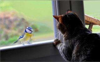 Примета — птица стучит в окно: всегда ли к горю