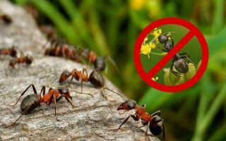 Как уничтожить муравейник на участке — лучшие средства от насекомых