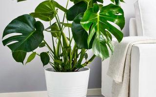 Домашние растения, которые притягивают неприятности как магнит