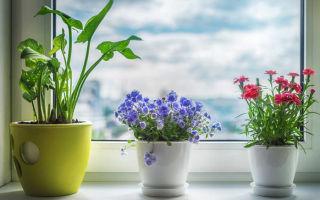 Цветы, которые приносят горе и невезение в дом