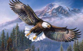 2019 год Парящего орла по языческому календарю: что он принесет
