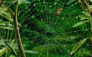 Что значит увидеть паука по приметам