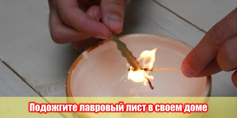 Если сжечь лавровый лист
